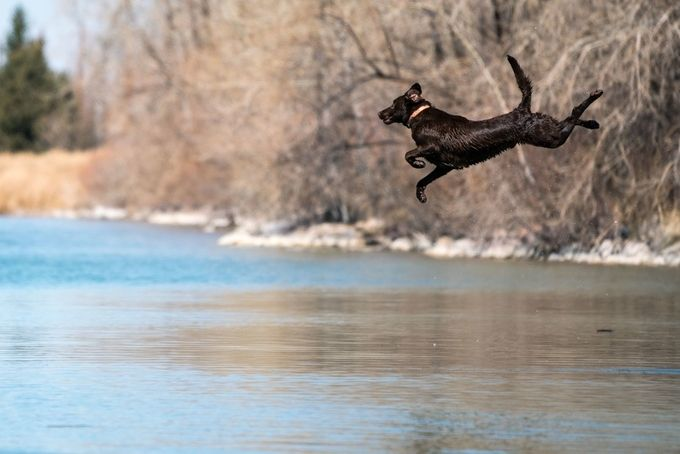 Leap of Faith by jowin2 - Animals And Water Photo Contest
