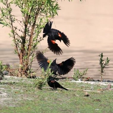 Reminds me of ancient Asian art paintings of birds