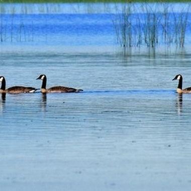 ducks ina row 2