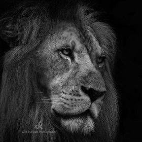 Thanks for your visits, your comments, awards and votes!  Black and White Animal Portrait by Dez Karpati