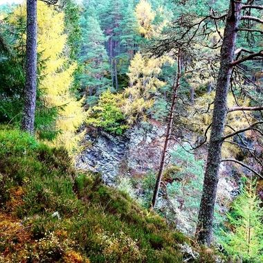 Stunning walk up the Falls of Bruar displaying the forest in Colours of Autumn