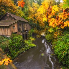 Beautiful fall colors on a wet drippy morning at the Cedar Creek Grist Mill