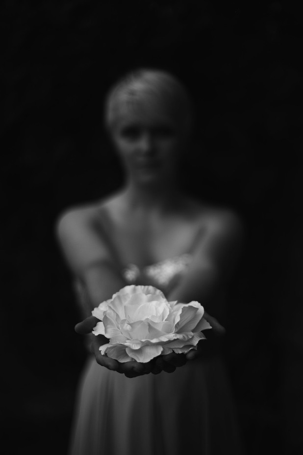 white rose of peace by darcithompson - Monochrome Creative Compositions Photo Contest