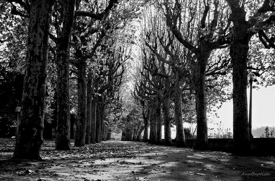 árvores nuas