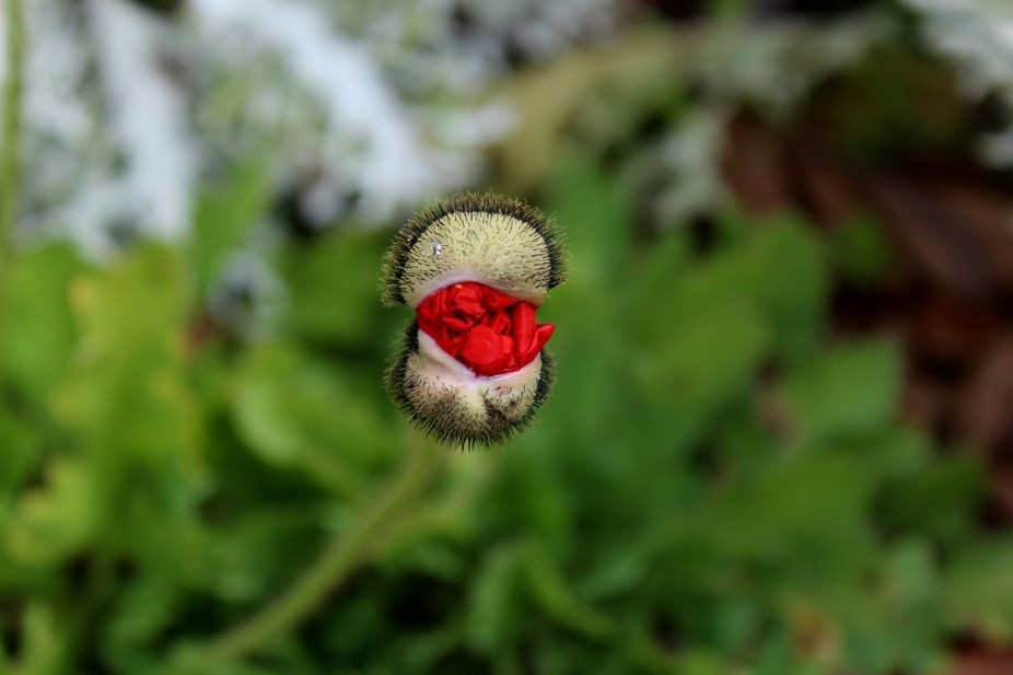 I found this budding flower while photographing in Brookgreen Gardens in South Carolina.