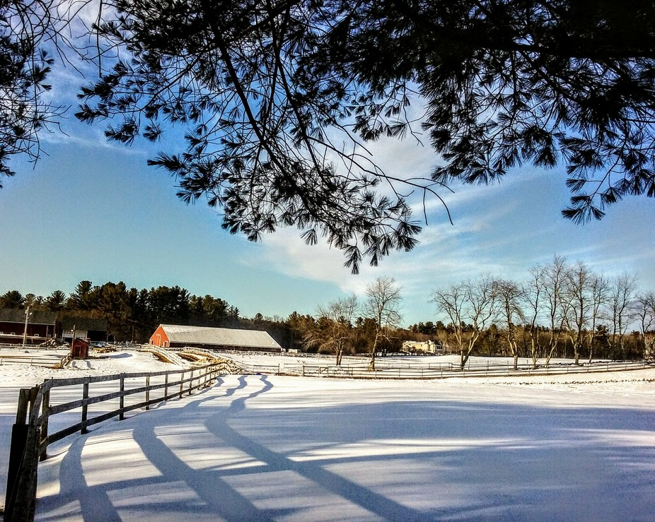 Horse farm at the end of the road. What a crisp day!