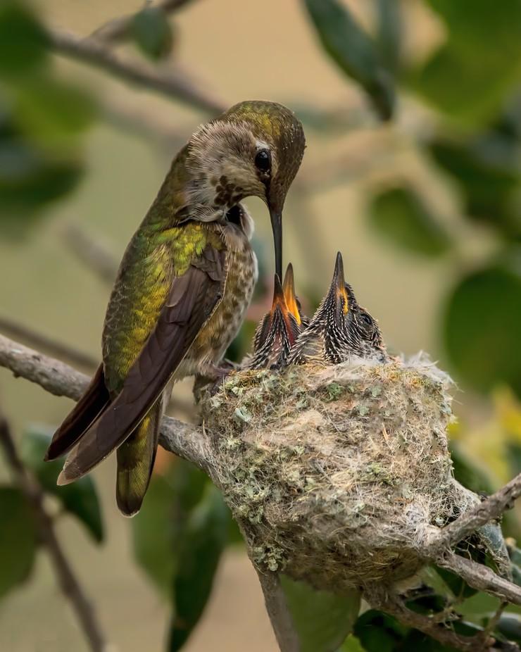 Devotion by nina050 - Hummingbirds Photo Contest