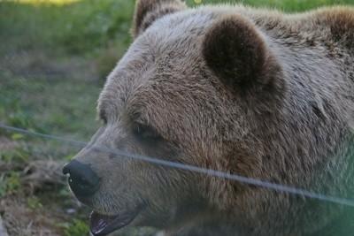 Friendly bear
