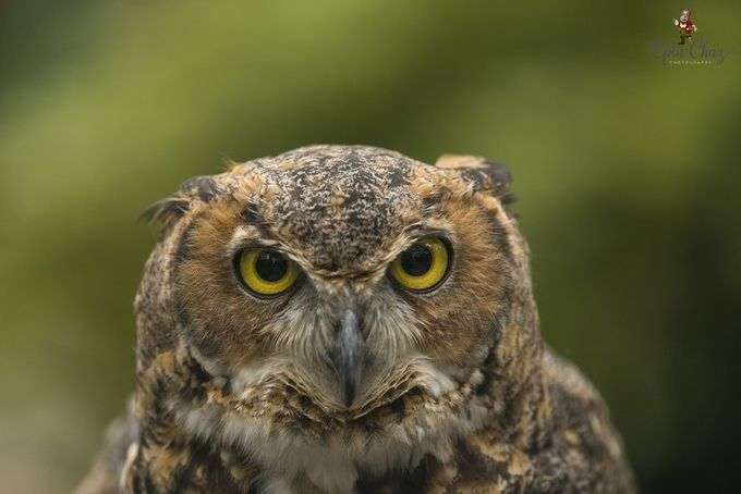 Owl City by CharlieMcMahon - Beautiful Owls Photo Contest