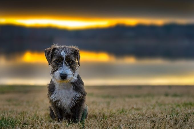 Sad little puppy by richtaylorphoto - Only Pets Photo Contest