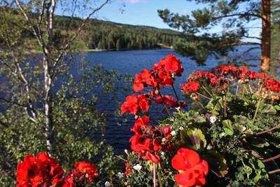 Just Northern landscape with flowers. Finland, Tahko.