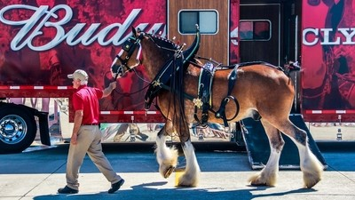 Budweiser Clydesdales At Boca Chica Airshow