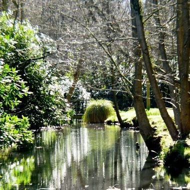 Ranworth Creek, Norfolk Broads, UK.