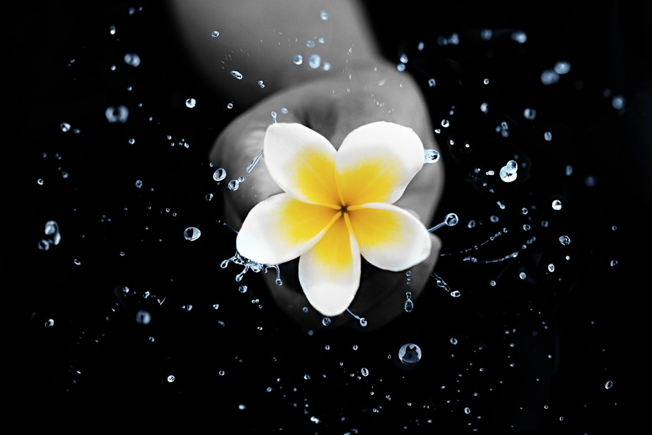 Plumeria Water Dance