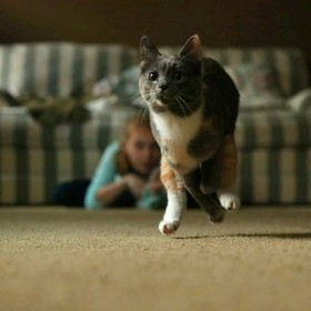 Cat in mid-sprint as it chases a toy