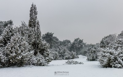 White Winter Morning