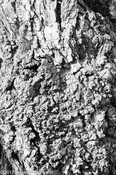 B&W Tree Bark