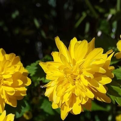 Spring: Yellow flower