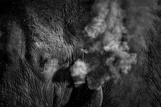 Tusker - Mud Bath by angad13 - Black And White Compositions Photo Contest vol2