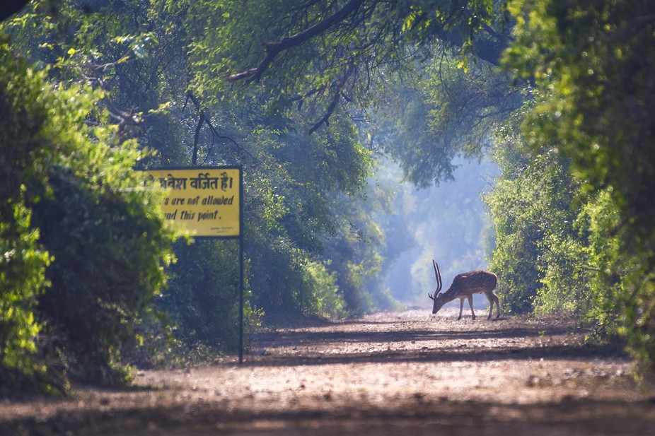 A beautiful morning with Spotted Deer Keoladeo National Park | Bharatpur | Rajasthan'17 ...