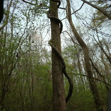 Looked like a giant snake attacking a tree