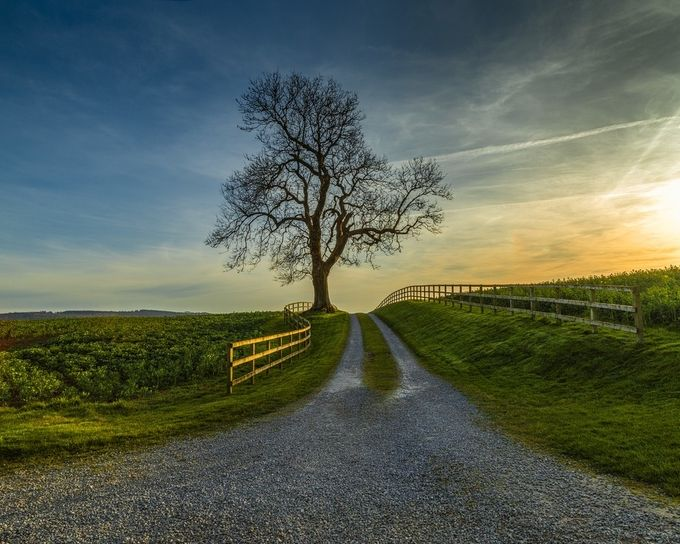 The Right Path by Ozbod54 - A Lonely Tree Photo Contest