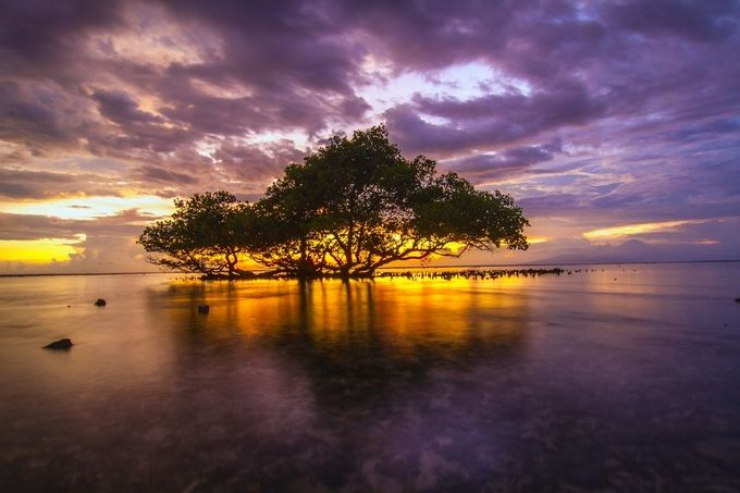 C E N T E R by ance87 - Tree Silhouettes Photo Contest