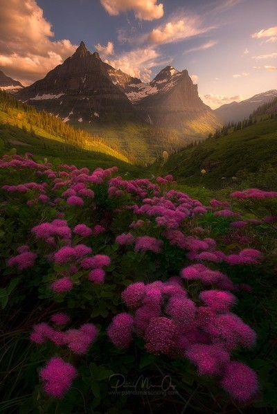 The sweet smell of grass and flowers, that breeze of warm air and the hot rays of the sun. Summer is just around the corner!  It was slippery-steep up by Theo-Herbots-Fotograaf