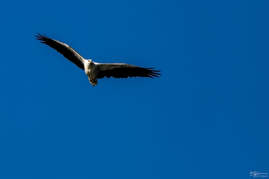 Since moving to East Gippsland I have seen these Eagles from time to time around the lake and bea...