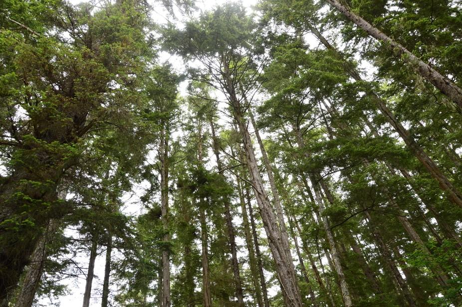 Sitka National Forest Park,Alaska