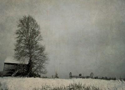 farm field 1