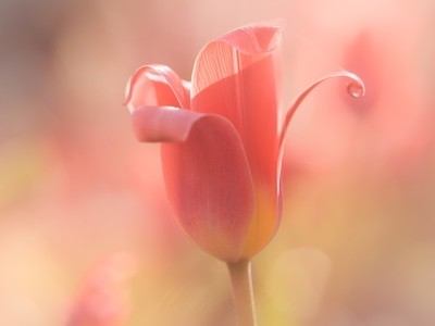 ** Spring **
