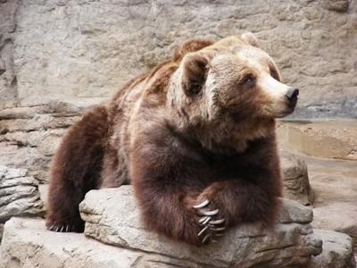 Mona Lisa... Bear Style!