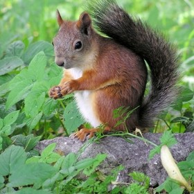 Just a Squirrel. Central Park of Culture and Leisure, Saint Petersburg.