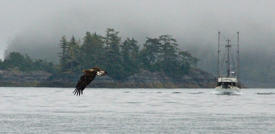 Taken North of Vancouver Island in British Columbia on a foggy morning.
