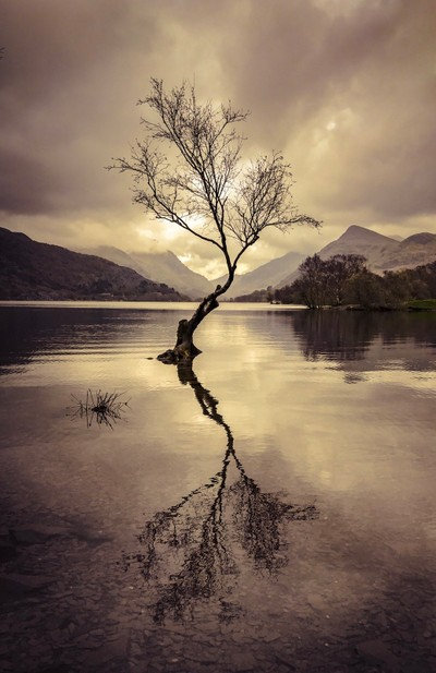 The tree in the lake Snowdonia