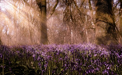 bluebell beams