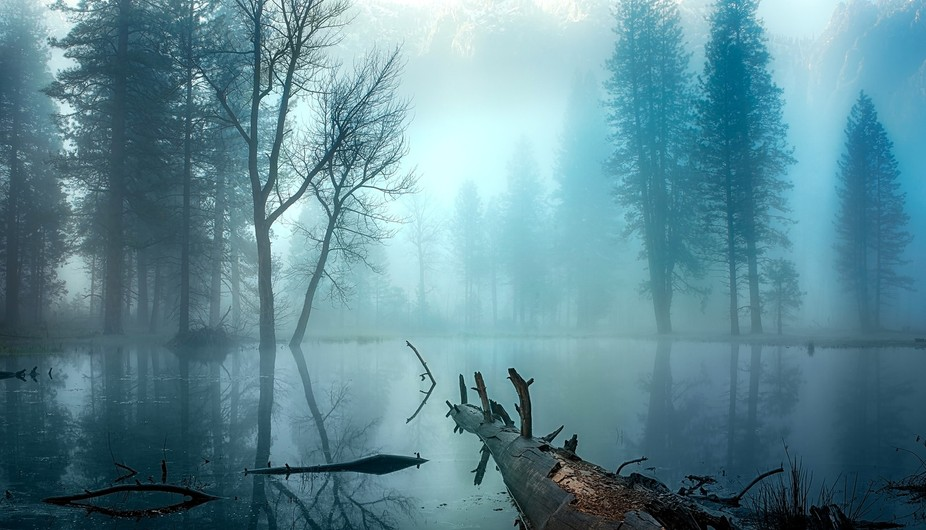 Photographed on a misty morning in Yosemite National Park.