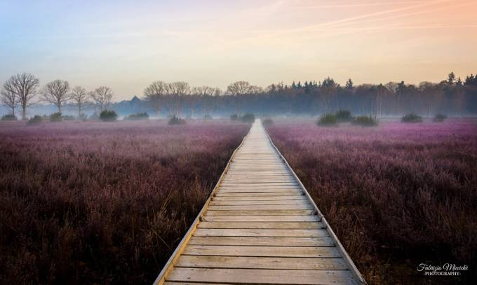 footpath in spring by FabrizioMicciche - Promenades And Boardwalks Photo Contest