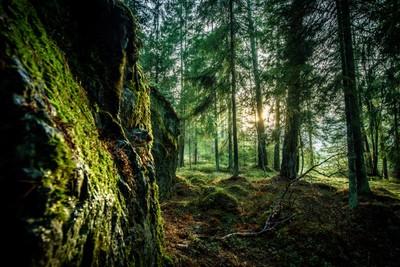 Runmarö Forest