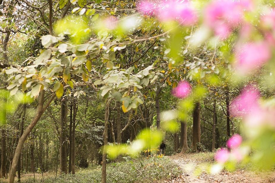 The Botanical garden in Dhaka, Bangladesh