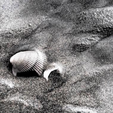 An Shell