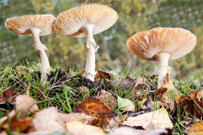 Fungi by Theo-Herbots-Fotograaf
