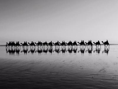 Camel Caravan..