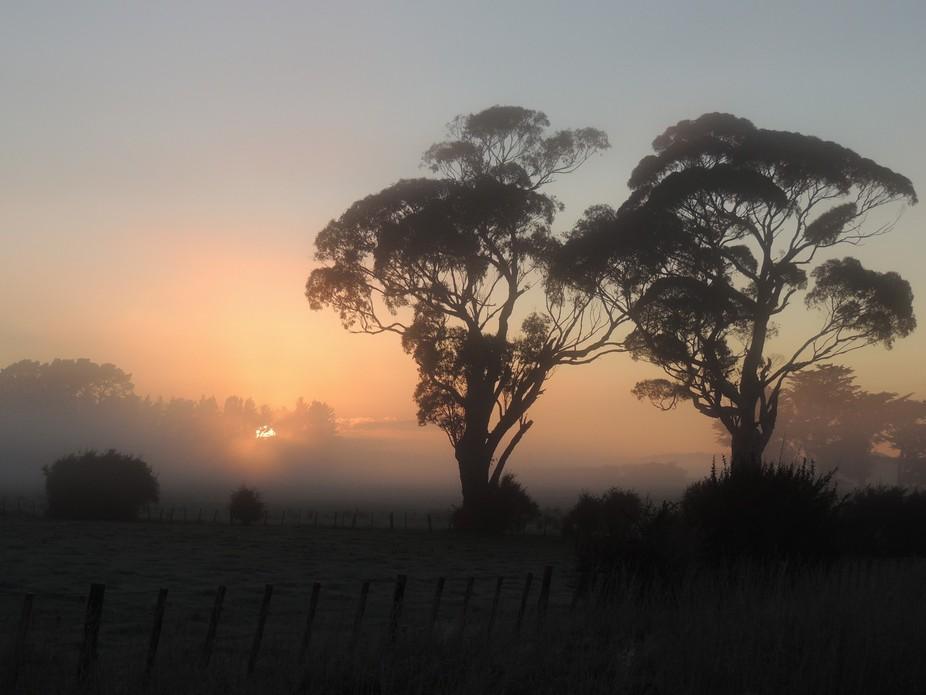 Waiohine Mist
