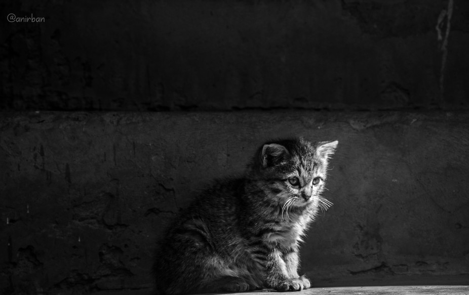 I found this lovely kitty posing as I was walking through the alleys of the Monpa Community in Ta...