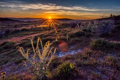 Corrizo Plains sunset sunburst II '17