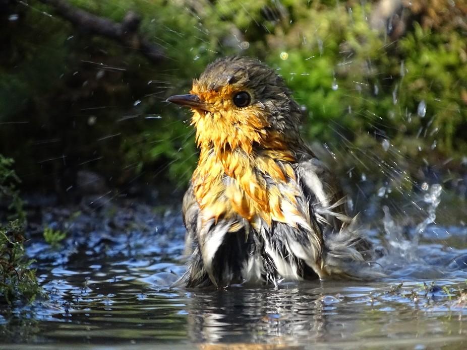Now that's a bath!