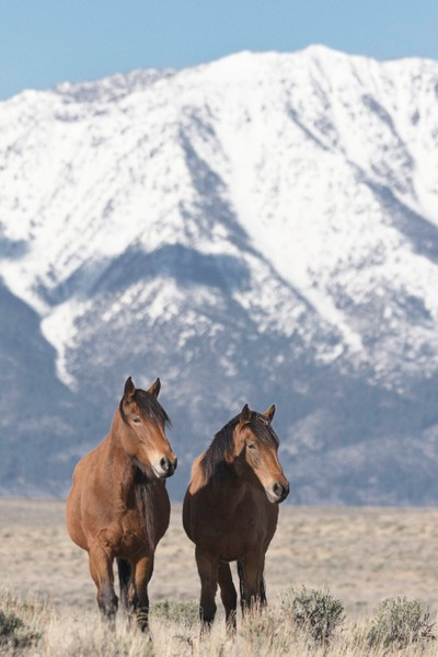 Mustangs with a View