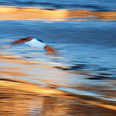 Eagle blur